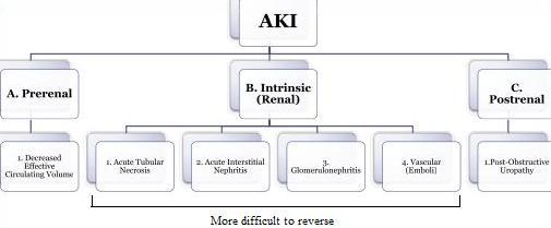 Acute kidney injury etiology of aki in hospital settings captureg ccuart Choice Image